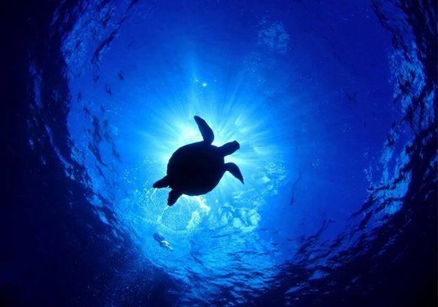 石垣島 ダイビング おすすめ ショップ